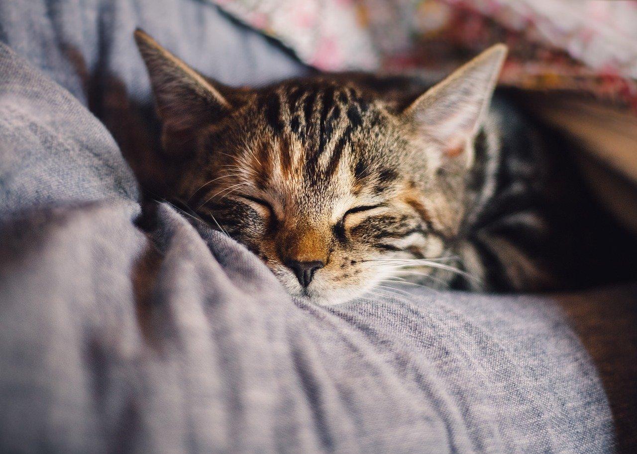 Pet Wellness Plans